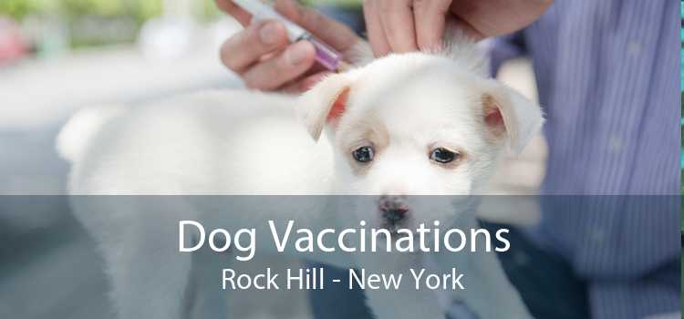 Dog Vaccinations Rock Hill - New York