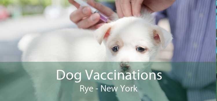 Dog Vaccinations Rye - New York