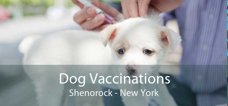 Dog Vaccinations Shenorock - New York