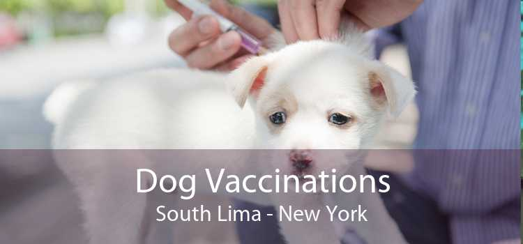 Dog Vaccinations South Lima - New York