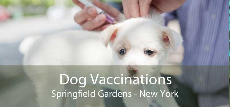 Dog Vaccinations Springfield Gardens - New York