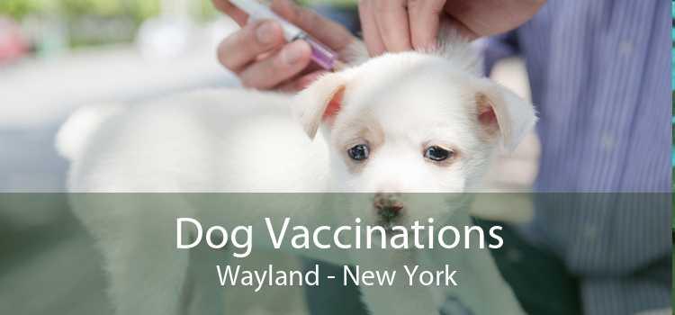 Dog Vaccinations Wayland - New York