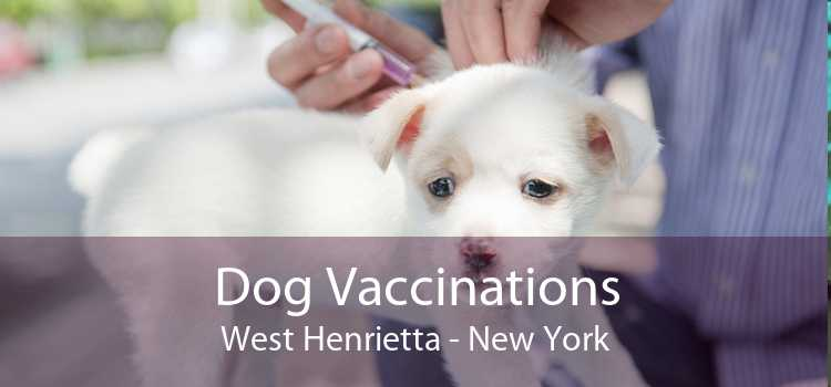 Dog Vaccinations West Henrietta - New York