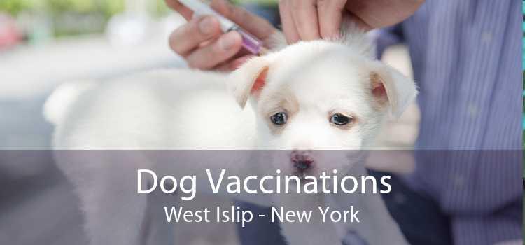 Dog Vaccinations West Islip - New York
