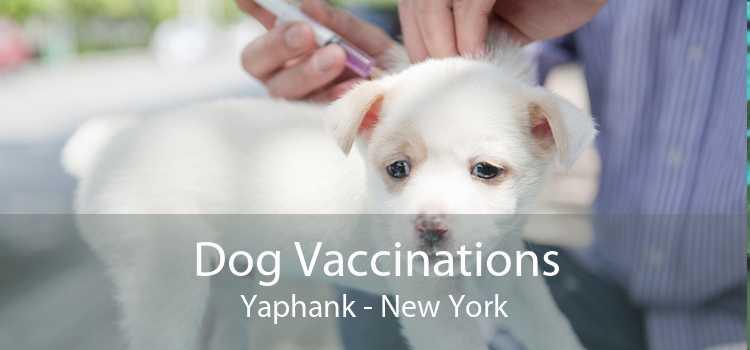 Dog Vaccinations Yaphank - New York