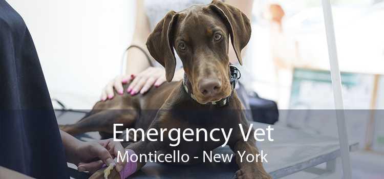 Emergency Vet Monticello - New York