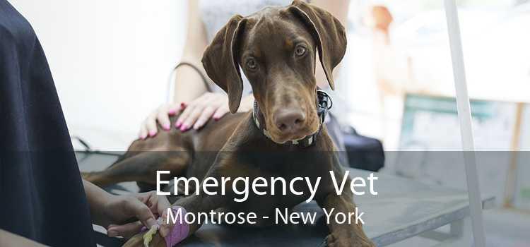 Emergency Vet Montrose - New York