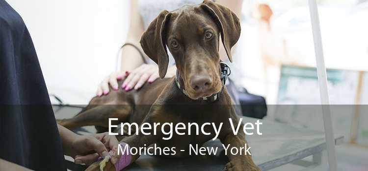 Emergency Vet Moriches - New York