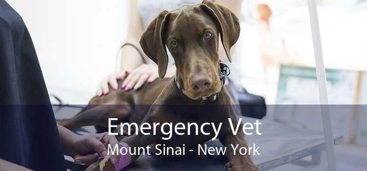 Emergency Vet Mount Sinai - New York