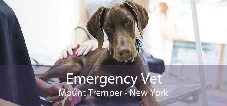 Emergency Vet Mount Tremper - New York