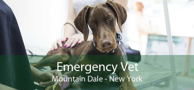 Emergency Vet Mountain Dale - New York