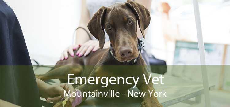 Emergency Vet Mountainville - New York