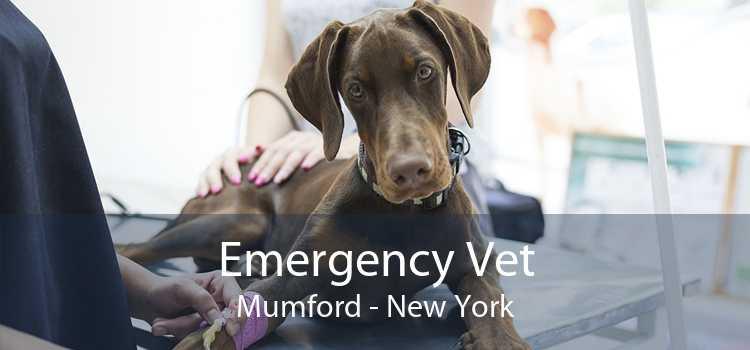 Emergency Vet Mumford - New York