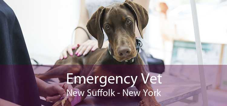 Emergency Vet New Suffolk - New York