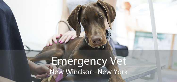 Emergency Vet New Windsor - New York