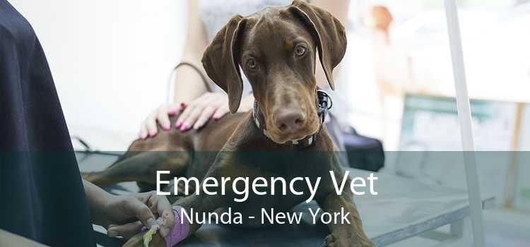 Emergency Vet Nunda - New York
