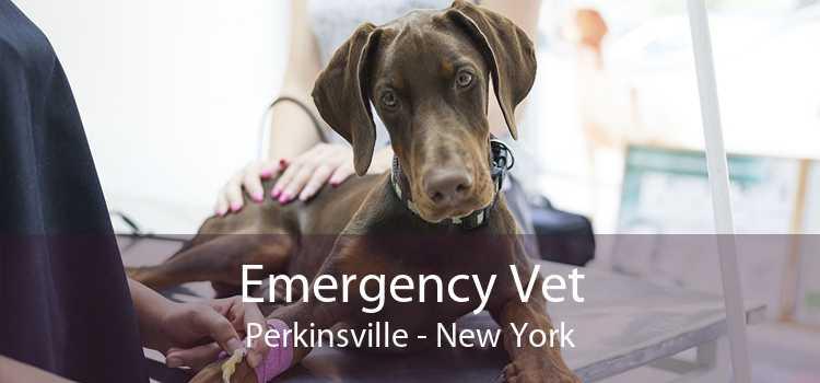 Emergency Vet Perkinsville - New York