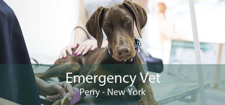 Emergency Vet Perry - New York