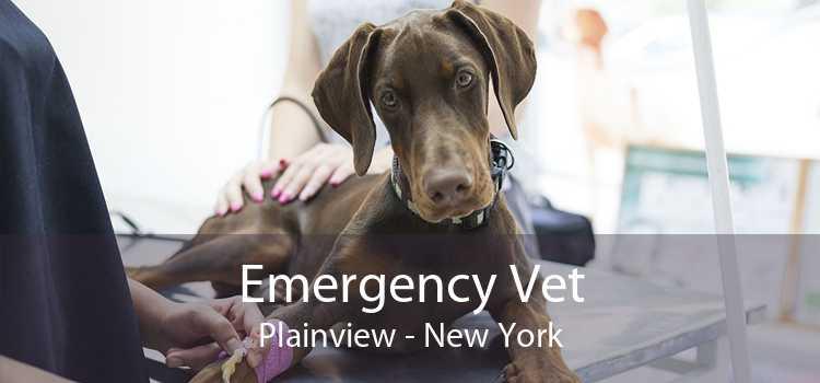 Emergency Vet Plainview - New York