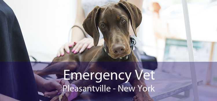 Emergency Vet Pleasantville - New York