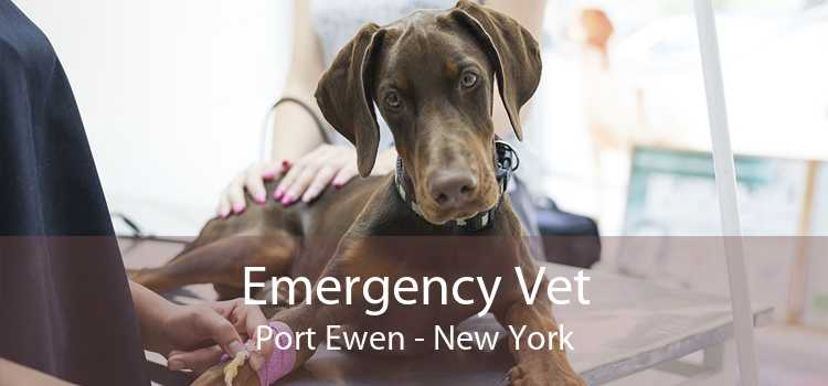 Emergency Vet Port Ewen - New York
