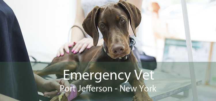 Emergency Vet Port Jefferson - New York