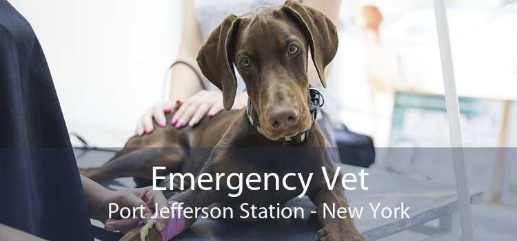 Emergency Vet Port Jefferson Station - New York