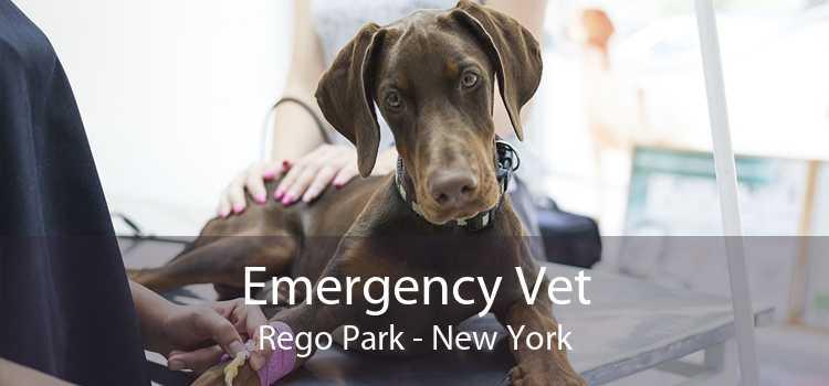 Emergency Vet Rego Park - New York