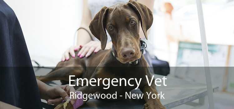 Emergency Vet Ridgewood - New York