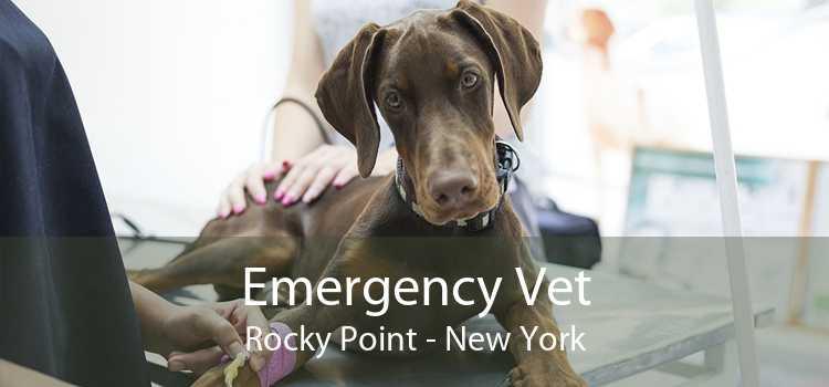 Emergency Vet Rocky Point - New York