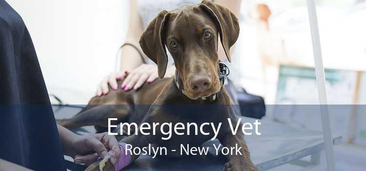 Emergency Vet Roslyn - New York