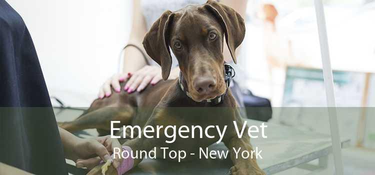 Emergency Vet Round Top - New York