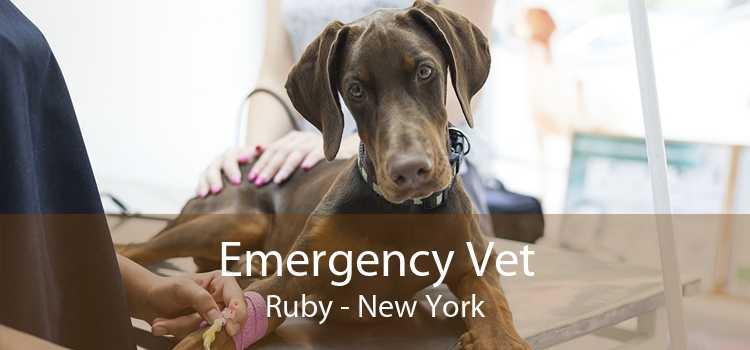 Emergency Vet Ruby - New York