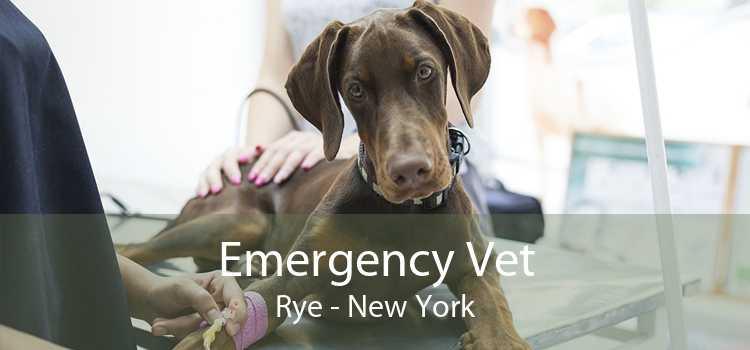 Emergency Vet Rye - New York