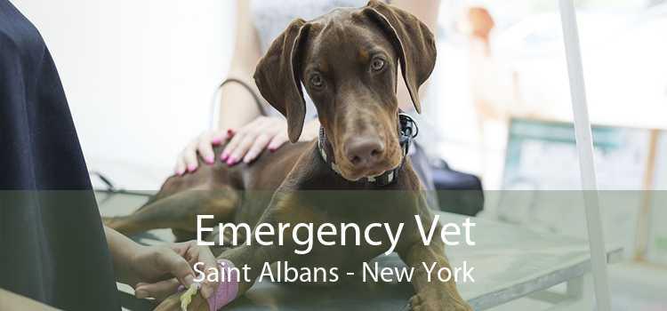 Emergency Vet Saint Albans - New York