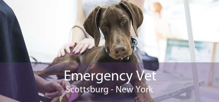 Emergency Vet Scottsburg - New York