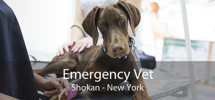 Emergency Vet Shokan - New York