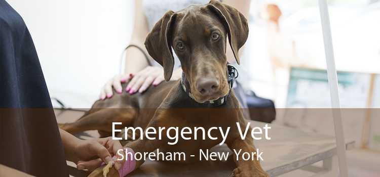 Emergency Vet Shoreham - New York
