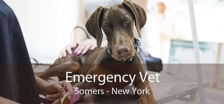 Emergency Vet Somers - New York
