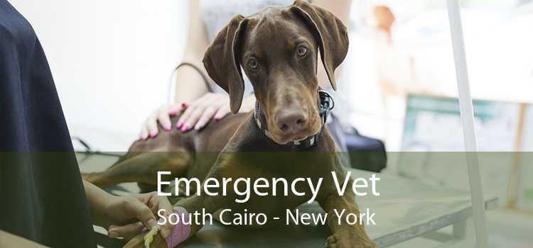 Emergency Vet South Cairo - New York