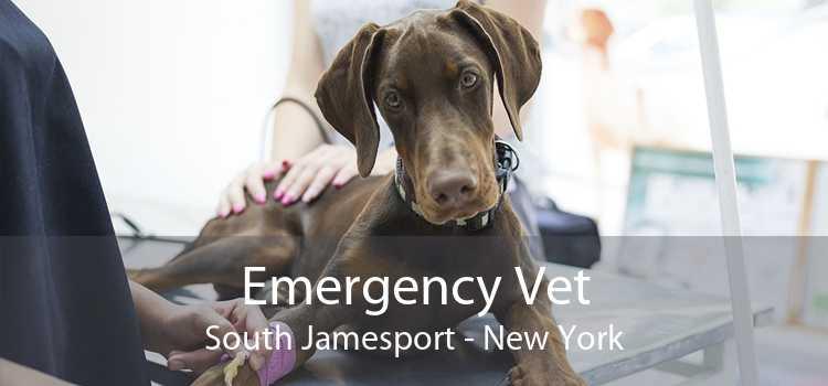 Emergency Vet South Jamesport - New York