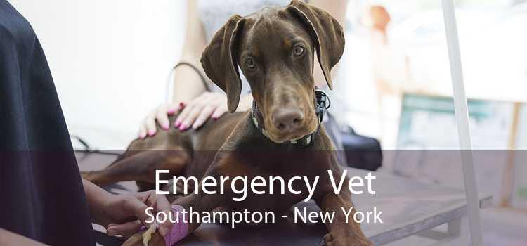Emergency Vet Southampton - New York