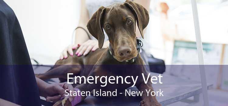 Emergency Vet Staten Island - New York