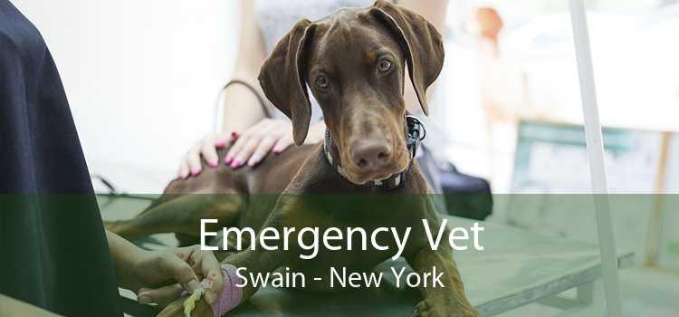 Emergency Vet Swain - New York