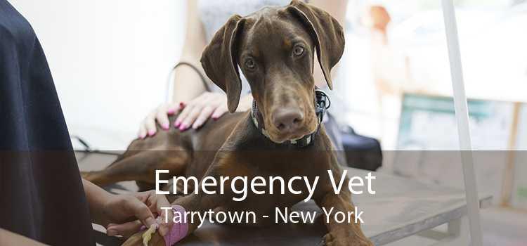 Emergency Vet Tarrytown - New York