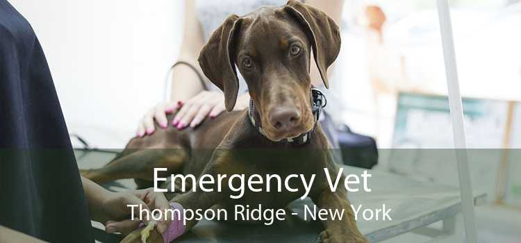 Emergency Vet Thompson Ridge - New York