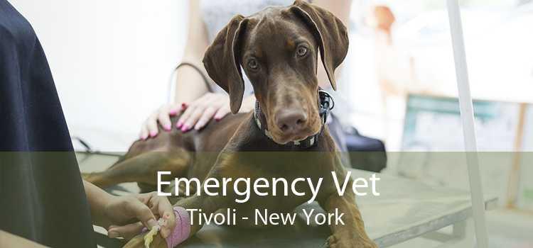 Emergency Vet Tivoli - New York