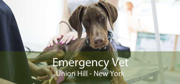Emergency Vet Union Hill - New York