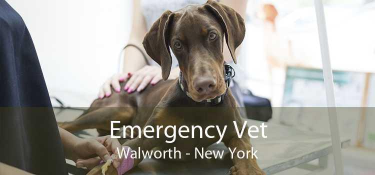 Emergency Vet Walworth - New York