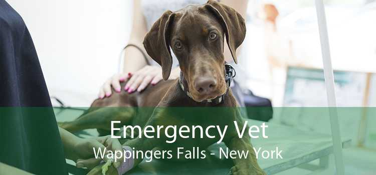 Emergency Vet Wappingers Falls - New York